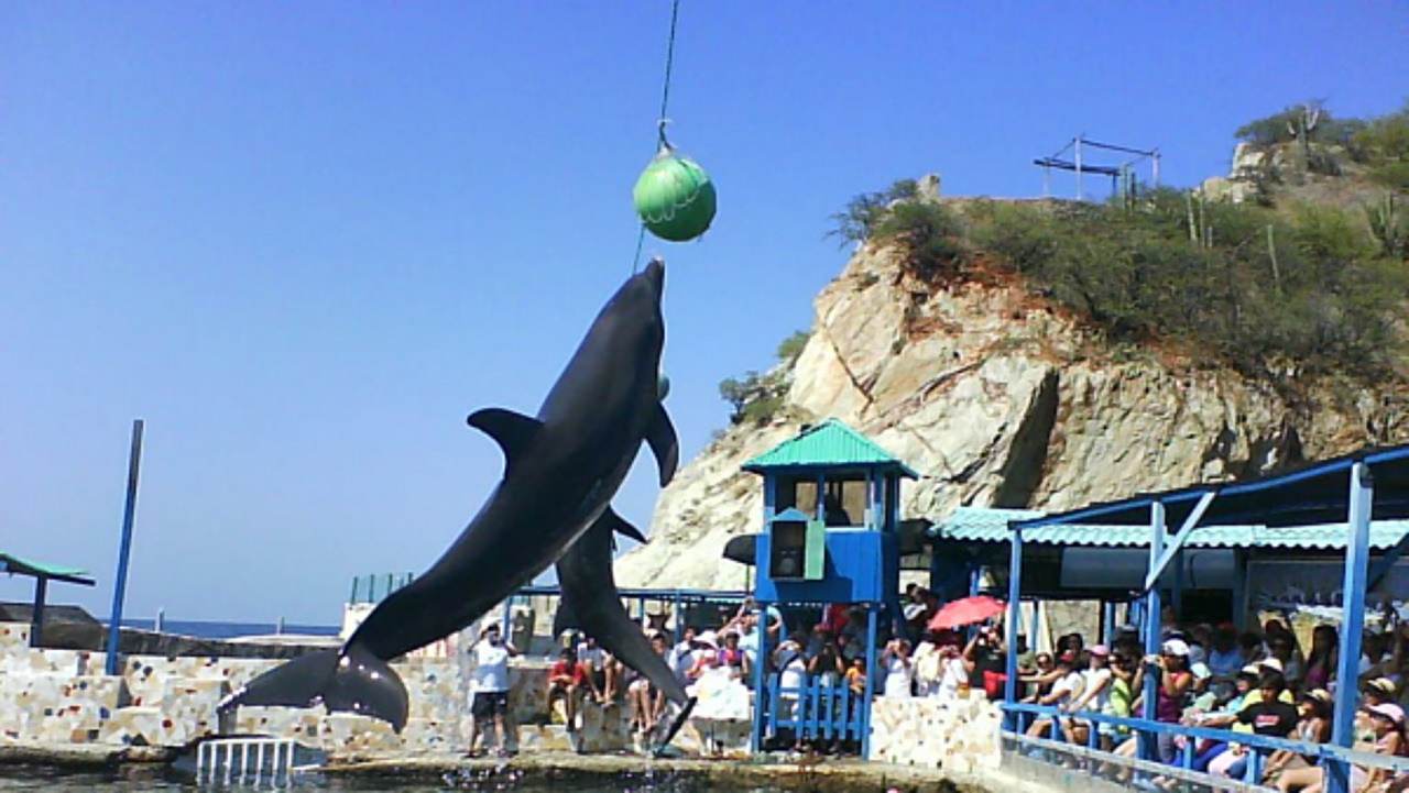aquarium of santa marta, hotel san miguel imperial, hotels with swimming pool, tourist sites